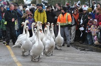 Swans Parade April 1